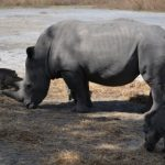 SENEGAL: Vanuit Gambia naar wildpark Fathala