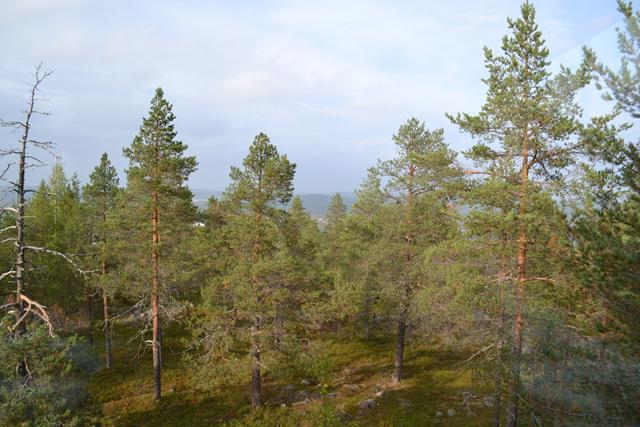 Local tips Lapland Finland