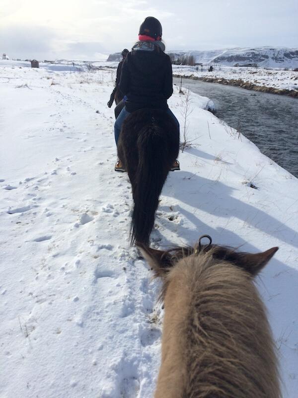 Wat te doen in IJsland: paardrijden