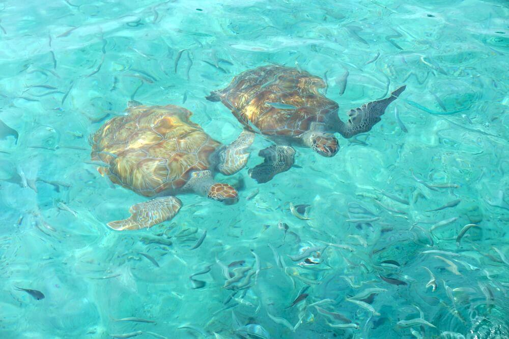 Roadtrip Curacao: Playa Grandi
