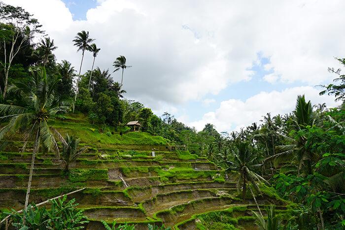 Bali tips: Ubud