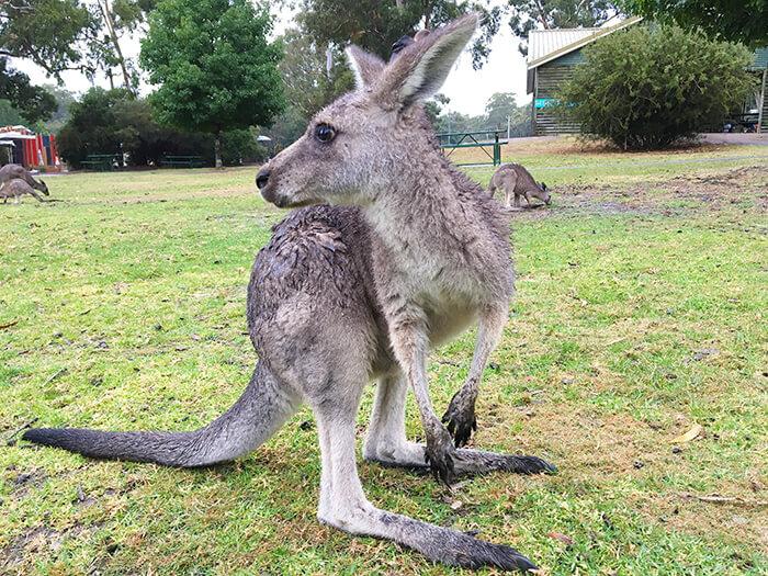 National parks Australie: Grampians