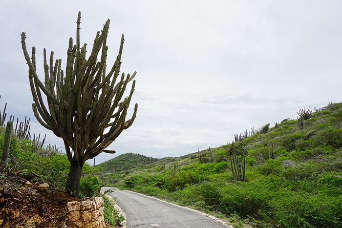 Doen op Aruba