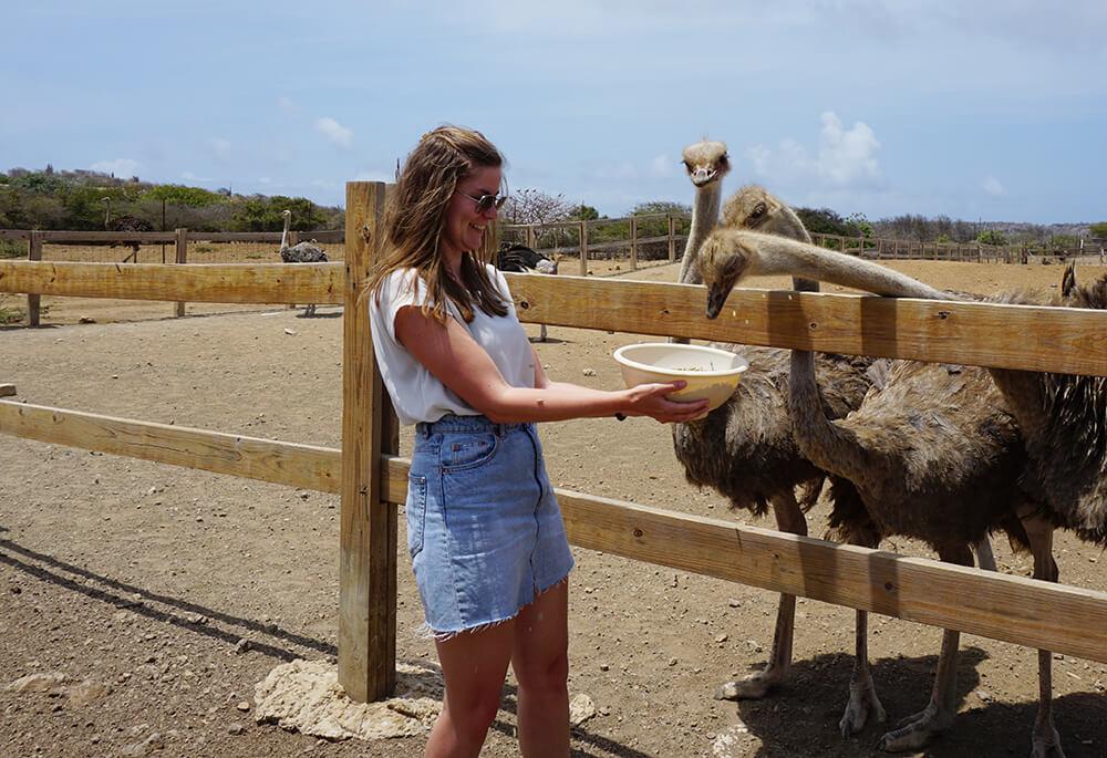 Wat te doen op Curacao: Ostrich Farm