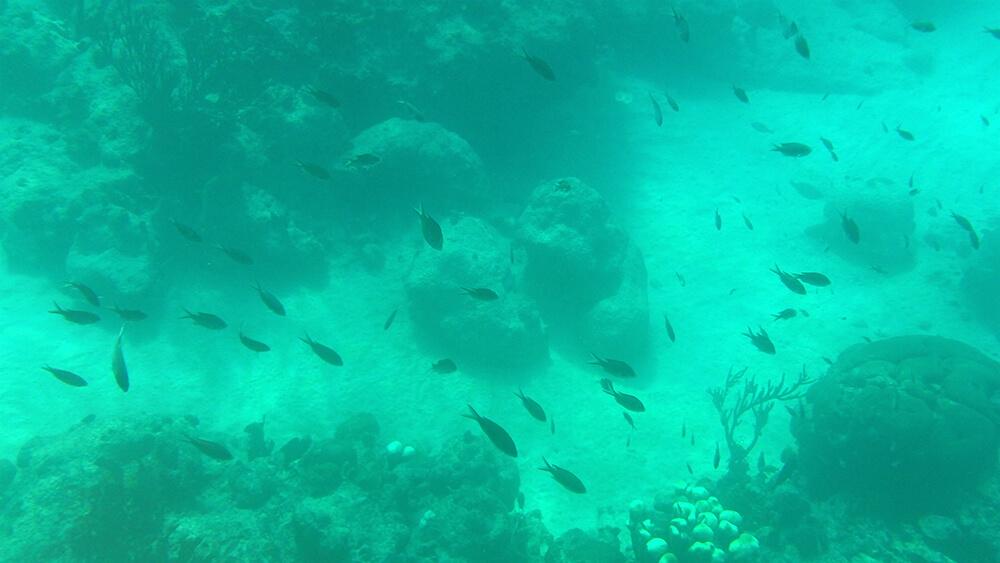Snorkelen Blauwe Kamer