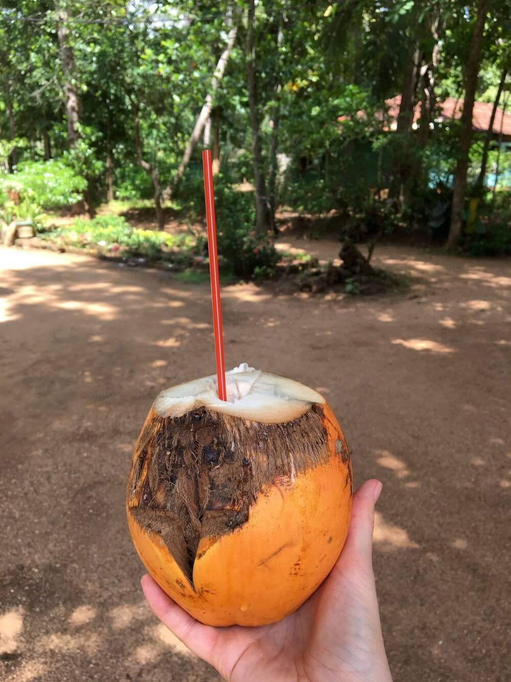 Wat te doen in Sri Lanka: eten