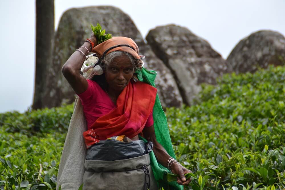 Wat te doen in Sri Lanka: theeplantages