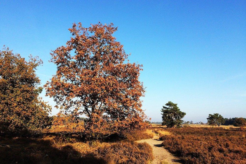 Wat te doen in Nederland: Veluwe